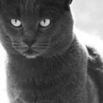 Katzen - die heimlichen Wächter des Friedhofs von Genua