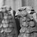 Wachsame Adler
