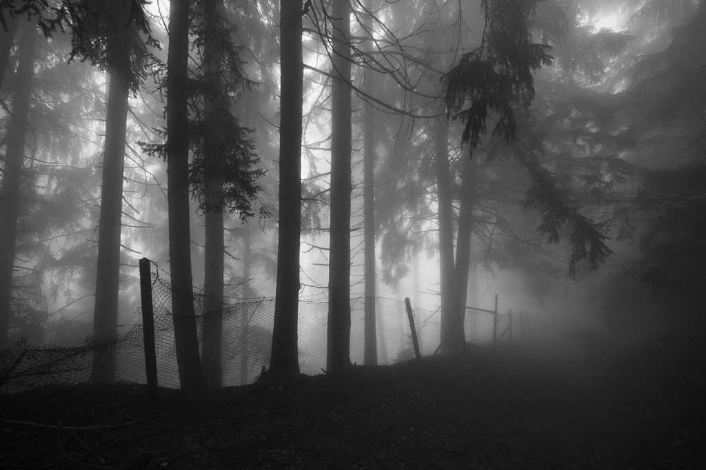 Auf der Suche nach weiteren Bauwerken führt ein Pfad durch den Wald