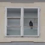 Altstadt: Viele Wohnungen stehen leer. Nur Tauben nutzen das mietfreie Angebot.