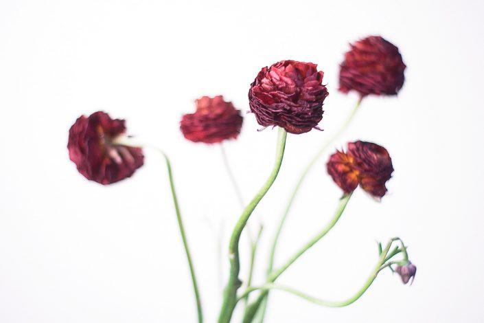 Blüten, Blumen